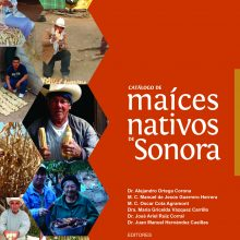 Catálogo de maíces nativos en Sonora