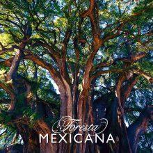 Foresta Mexicana